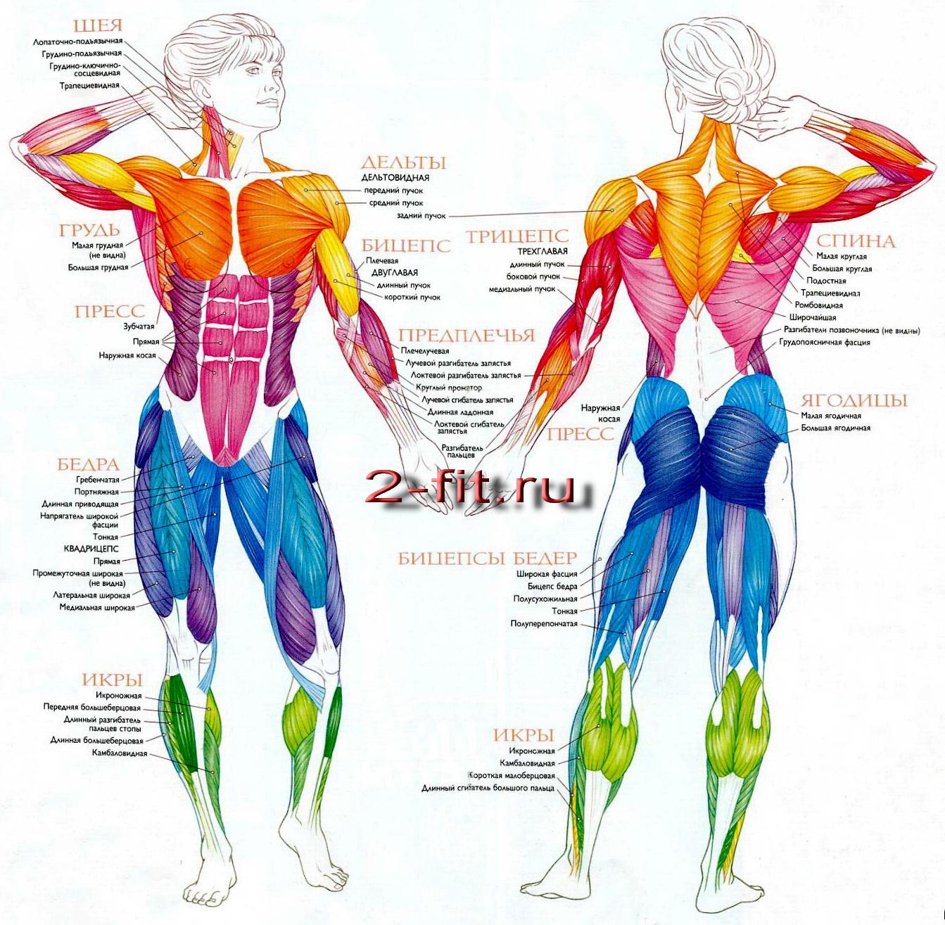 Упражнения с фитнес резинками отзывы